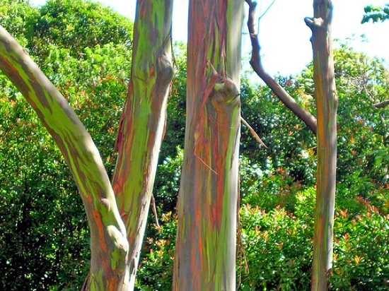 Copaci iesiti din comun (Galerie foto)