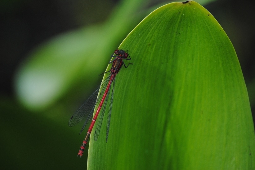 Hrana viitorului nu e deloc sigura: Avertisment la nivelul UE despre insecte